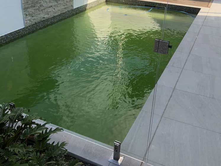 pool-before-being-cleaned-from-algae